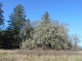 West Rocky Prairie Wildlife Area 022020 09