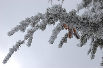Frosted trees on summit