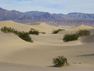 Mesquite dune scene