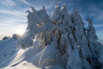Snowy Tree Monster