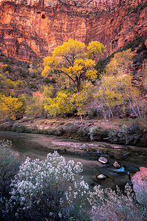 Virgin River Cottonwood-