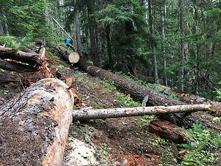 A big section of log has been rolled across the trail on the ramps - log visible on right (Joe Hofbeck photo)