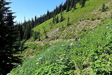 Skyline ridge trail. Later in the day the brush was cleared for the Fat Dog 100 run.