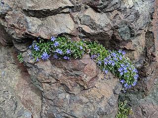 Crack flowers