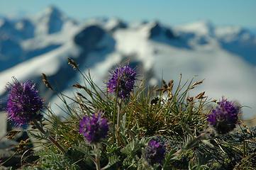 wildflowers on ruth's summit