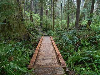 Kalaloch Nature Trail 051619 01