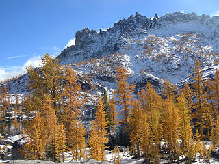 Larches in the Lower Enchantments