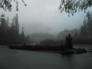 large tree in the middle of the river