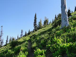 Snag spot on Crystal Peak trail.