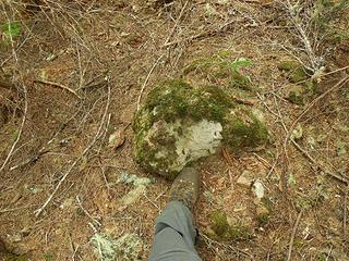 foot next to the summit rock (wooded summit) of Prospect Ridge, 3812'
