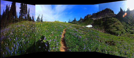 33. Flower field on the Cowlitz Divide