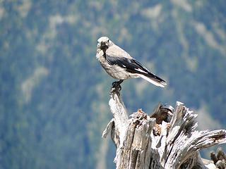 Bird good shot.