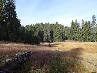 back in the second meadow before ascending back to Johnson Ridge and Scorpion.