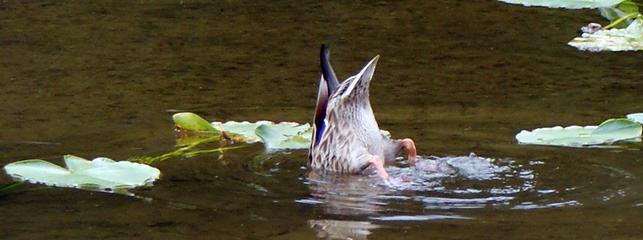 Duckbutt Lake2