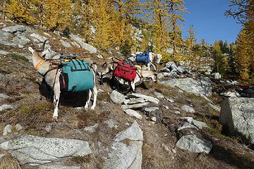 On the Peepsight Lake 'trail'