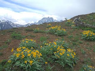 Mt. Stuart behind balsamroot
