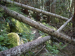 Some of the many blowdown on the Dingford Creek trail. Someone had previous cleared out some of the branches making them easier to pass. On the way out we noticed someone had been up this day with a chainsaw cutting out others.