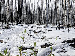 Snow and burn create a stark wintery landscape higher up
