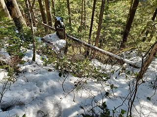 "The terrible snow transition section of the Blum Lakes ""trail"""