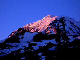 climbed observation rock which is the peak just in front of Rainier. this was taken at 6 am while haveing coffe in camp