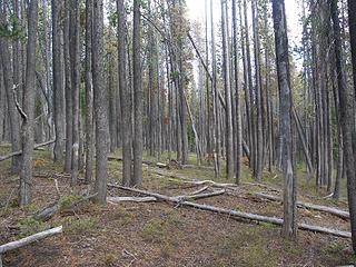 Meandering through the ghost forest