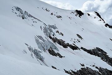 Walrus glacier ice