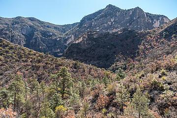 McKittrick Canyon 1.30.21