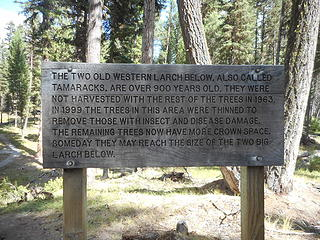 Larch Sign