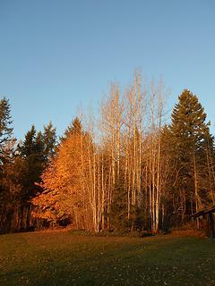 Alder Lake Park 102819 04