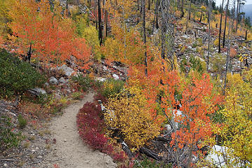 Aspen in Lower Andrews Creek valley