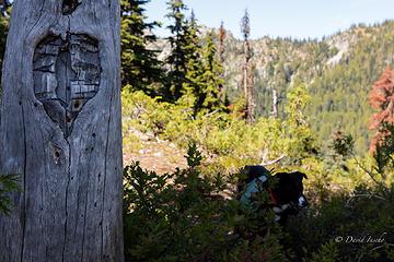 Love the forgotten trails