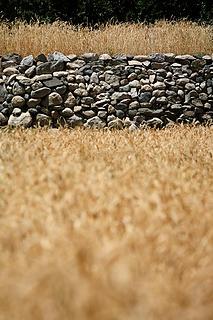 129- Wheat fields
