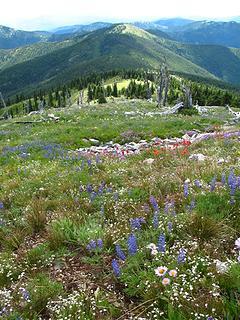 Flower meadows along Abercrombie.
