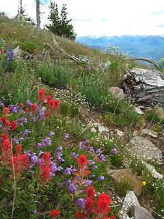 Wildflower covered slopes of Abercrombie.