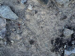 A Stefan or Eric footprint?