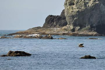 didn't notice the rock lined with seals until I got home
