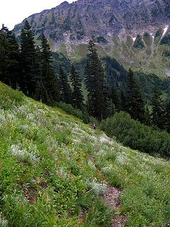 Descending sheep trail in flowes