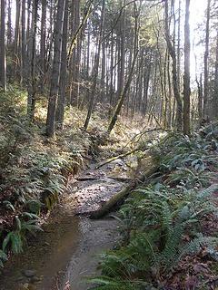 Swan Creek Park 022120 07