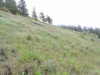 A grassy ascent on White Mtn.