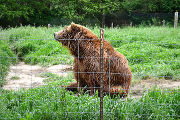 1st bear