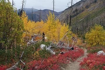 Lower Andrews Creek valley