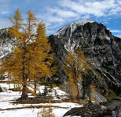 Big larches & North Spectacle Butte