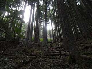 Looking up from the trail.  The official trail ends just above this blowdown section.