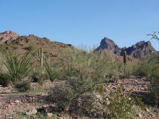 Sonoran scene