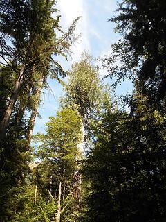 Asahel Curtis Nature Trail No. 1023 082819 04