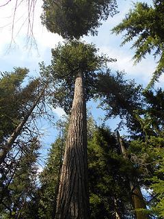 Asahel Curtis Nature Trail No. 1023 082819 02