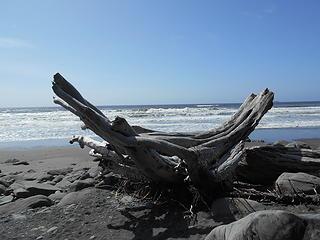 Kalaloch Beach 5 082219 06