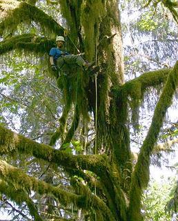 tree climbin