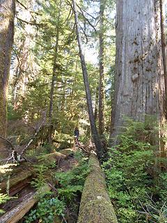 Kitty Cedar Grove Trail 082219 01