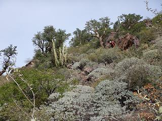 Petter cactus-shwacking